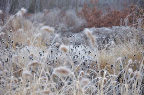 Un Paseo Invernal De Henry David Thoreau Galiciangarden