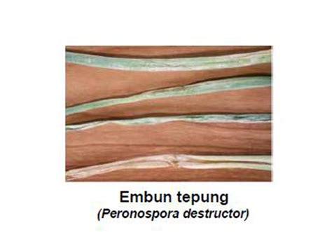 Fungisida Benlox 50 Wp daftar fungisida diijinkan dan terdaftar untuk tanaman