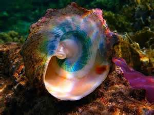 color shell conch shell rainbow colors colorful world