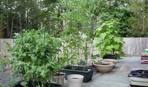 fall container gardening vegetables container gardening vegetables interesting ideas for home