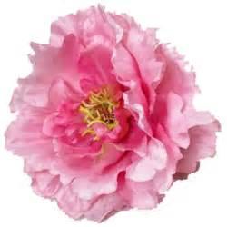 Pianese Flowers Grower Direct Flower Varieties Peony