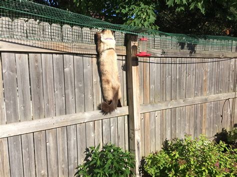keep cats in backyard cat containment fence one reader shares how he contains