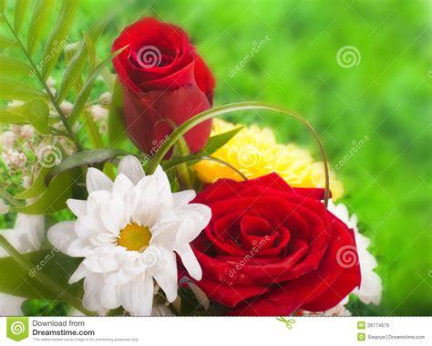 imagenes rosas muy hermosas rosas hermosas en estilo retro imagen de archivo imagen