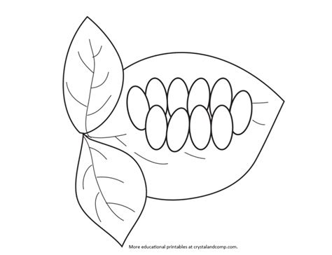 caterpillar egg coloring page drawn caterpillar butterfly egg pencil and in color
