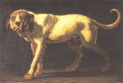 extinct dogs barks from the past 10 extinct breeds reflections