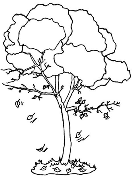 Fall Tree Coloring Sheet Coloring Pages Fall Tree Coloring Page