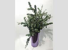Hojas para arreglos florales - floryfauna Noticias