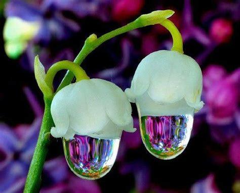 Beautiful Flower Dan Custom Nama seldom seen flowers flowers and flower