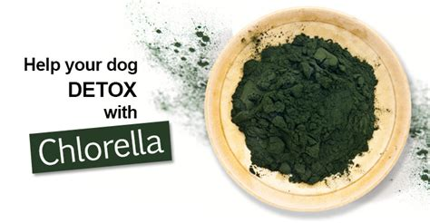 Chlorella Detox Studies by Archives Datesgala