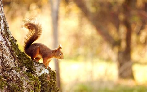 squirrel wallpapers hd wallpapers id