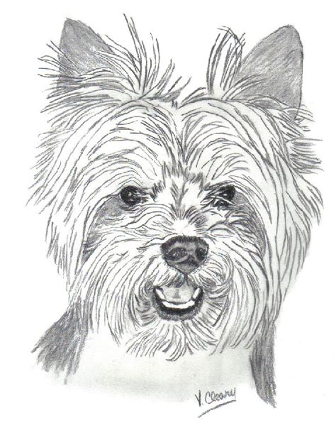 drawings of yorkies how to draw yorkie puppies
