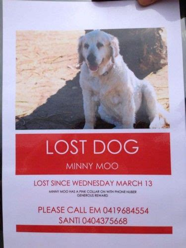 lost golden retriever pin by where pets are found on lost dogs australia nz