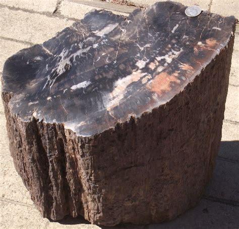 woodworking utah petrified wood log from utah miners gallery