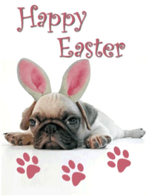 happy easter pug happy easter pug pictures photos and images for and