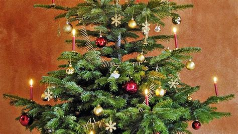 so bleibt der weihnachtsbaum lange frisch ndr de