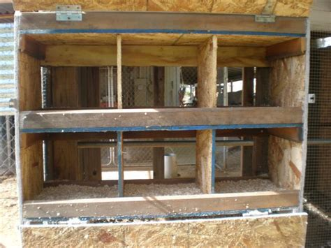 Backyard Chickens Nest Box Size Nest Boxes For The Plus Size Backyard Chickens