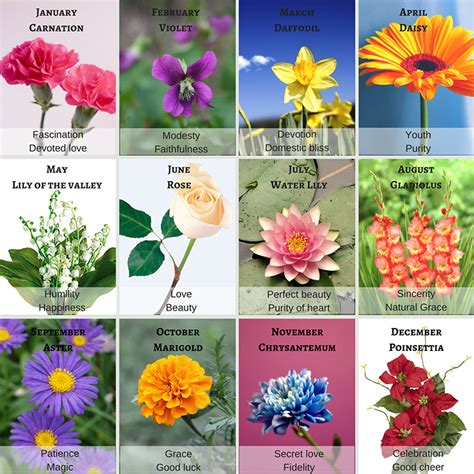 symbolism of plants 28 images pictures of flowers and their meanings beautiful flowers