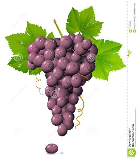 imagenes de uvas kangris racimo de la uva im 225 genes de archivo libres de regal 237 as