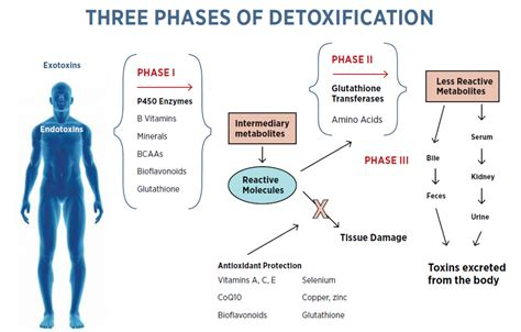 Correct Detox Procedures by The Basics Of Detoxification Isagenix Health
