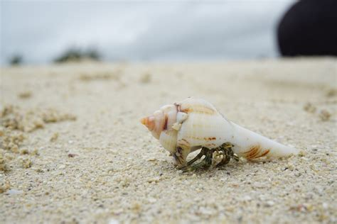 Kulit Kerang Laut gambar tangan alam hewan makanan laut kerang