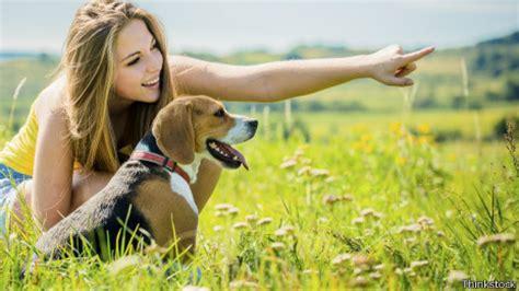 perros con personas 191 qui 233 nes m 225 s inteligentes los perros o los delfines