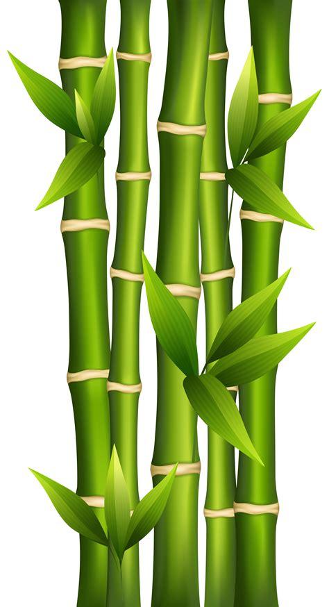 bamboo clip bamboo clipart clipground