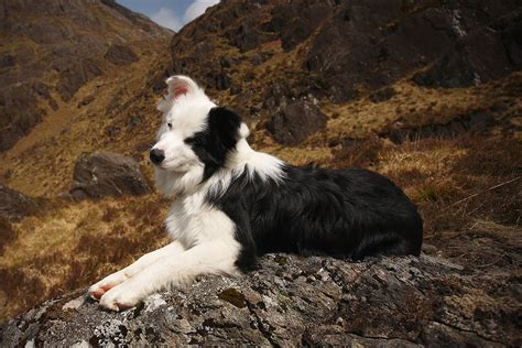 best hiking dogs best breed to take hiking dogs breed sierramichelsslettvet