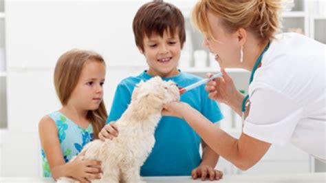 casi clinici medicina interna centro diagnostico veterinario seltravet 232 il sito di