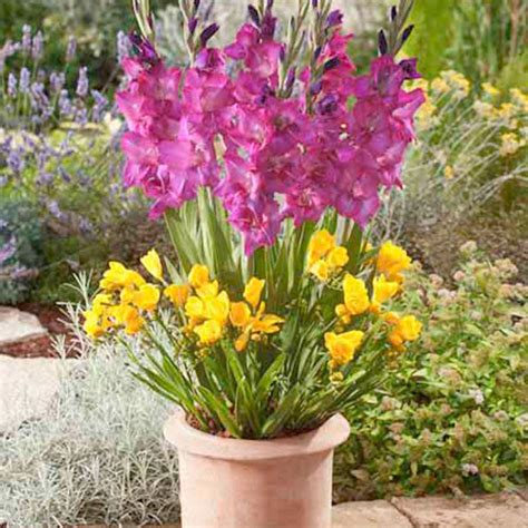 Flower Bulb Planter by Plant O Mat Classic Gladiolus Freesia And Mix