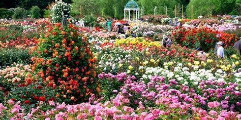 Bibit Bunga Matahari Di Bandung warna warni lautan bunga di 5 kebun mawar terindah dunia