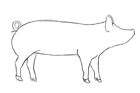 Pig Outline by How To Draw A Pig Draw Central