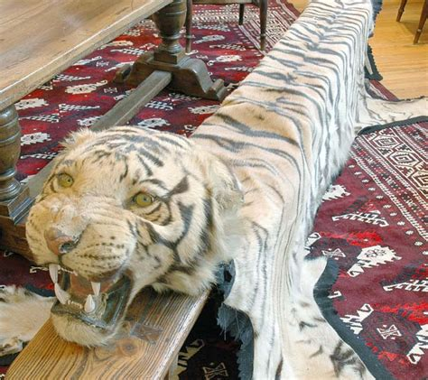 tiger rugs for sale benghal tiger skin rug with a decorative arts furniture leonard joel pty ltd antiques