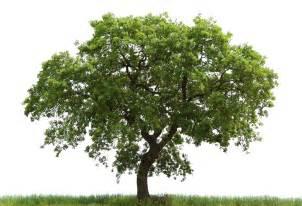 tree archives go mighty