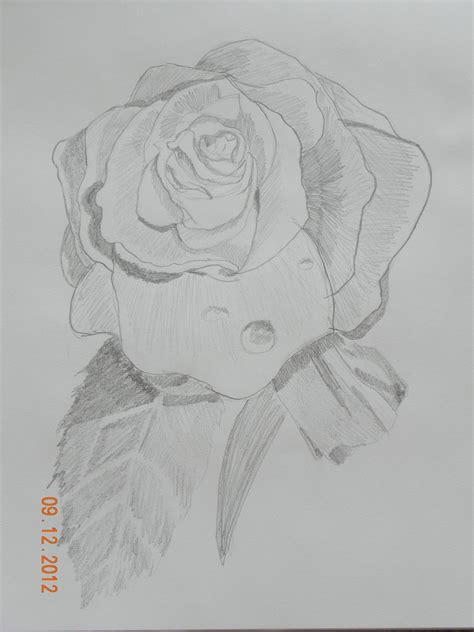 Sketches Of 8 by Pencil Drawings Flowers