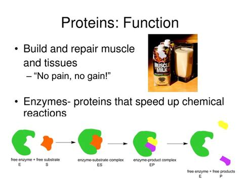 n protein function ppt macromolecules powerpoint presentation id 1095921