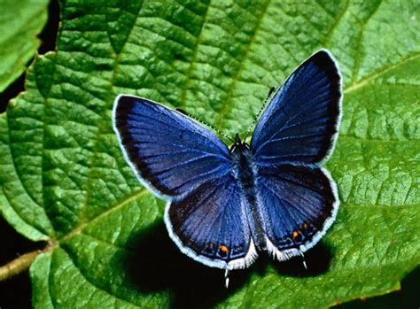tato kartun berwarna 25 gambar kupu kupu wallpaper kupu kupu cantik terindah