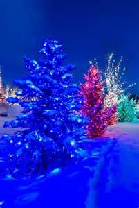 christmas lights in snow christmas lights pinterest