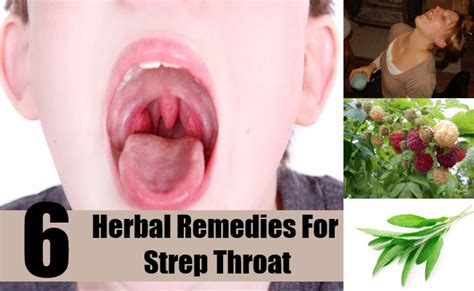 6 effective herbal remedies for strep throat how to