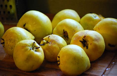 The Fruit by Quince No Longer A Mystery Smith Lever