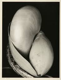 edward weston masters of 0893813044 masters edward weston