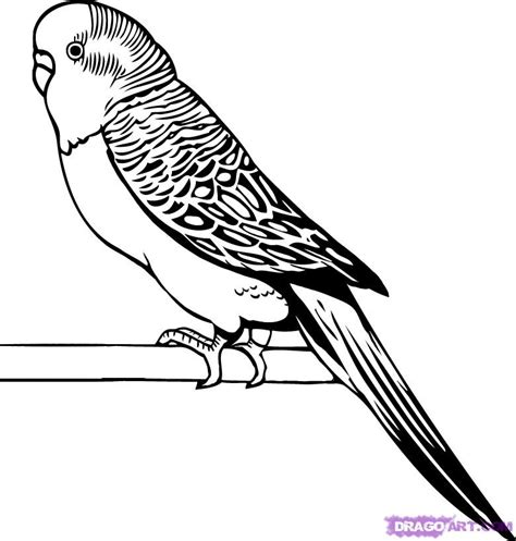 parakeet pictures to color az coloring pages