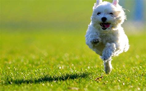 puppies running 9 of the cutest running puppies a happy national running day what s trending