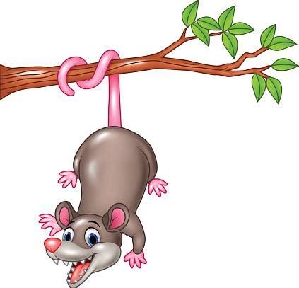 opossum clipart possum clipart clipart best