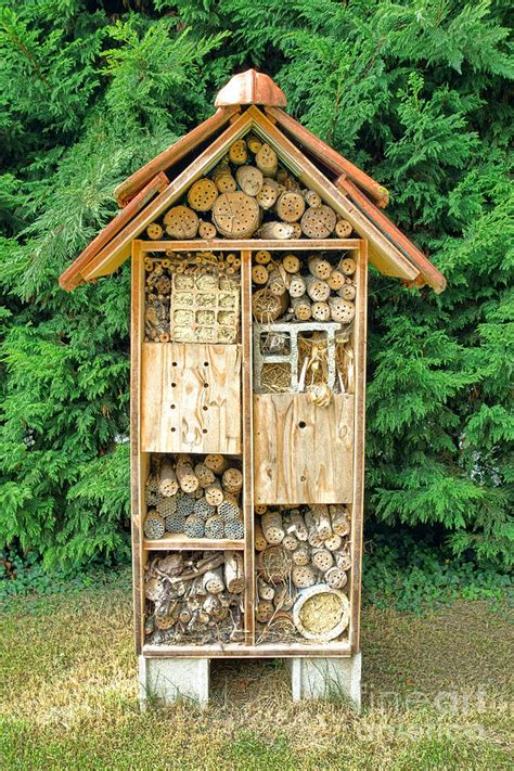 bee house plans bee house photograph by olivier le queinec
