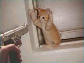 搞笑猫 图片 互动百科