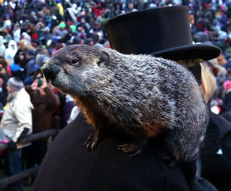 groundhog day how it s groundhog day find out if phil saw his shadow