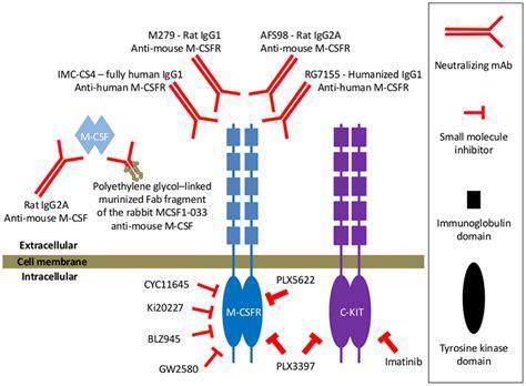 t protein csf frontiers functional relationship between tumor