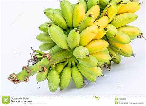tiny banana name tiny banana name 28 images buy small yellow bananas in uganda gloomy skies and mini bananas