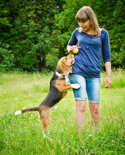 how to stop puppy from jumping how to stop a from jumping up pet care facts