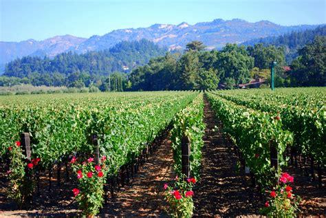 Photo Napa Valley by Mille Fiori Favoriti Napa Valley Beringer Winery